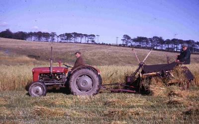 P60080; 'A late harvest' on Seafield Farm