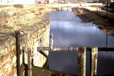 P06255; Lock 8 in a derelict state, Forth and Clyde Canal