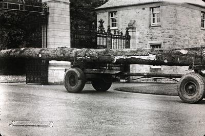 P06837; Felled tree on lorry