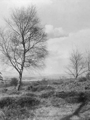 """P11321; """"Mid Birch and Bracken"""""""