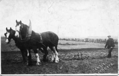 P45476; George Roy ploughing in field