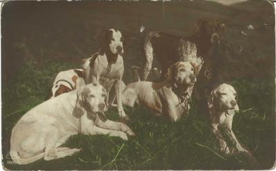 P45911; Hunting dogs