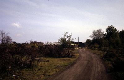 P49342