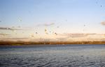 Birds over the Forth.