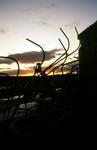 Evening cloudscape, at Mungal farm