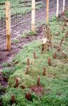 Balmitchell FWAG Avon Landwise Projects - Kaemuir Farm