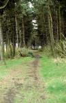 Woodland & Path, Skinflats Foreshore area