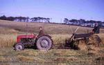 'A late harvest' on Seafield Farm