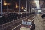 Byre, Boagstown Farm
