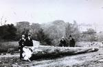 Workers with felled tree