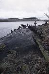 Wreck of sailing barge