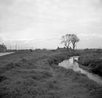 Bow Farm Cottages, Grangemouth
