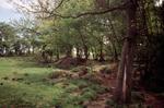 Househill temporary Roman camp