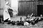 Woman feeding chickens on unknown farm