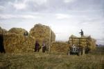 Stacking hay, Bowhouse farm