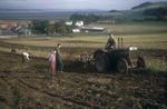 Potato harvesting - tractor with tattie howkers