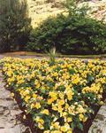 Dollar Park flower beds