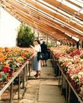 Dollar Park greenhouses