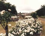 Flower beds on Callendar Rd, Falkirk