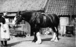 Margaret Roy with horse
