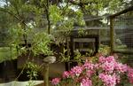 Aviaries and rhododendrons at rear of Beehive Day Nursery