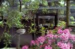 Aviaries with birds and rhododendrons