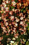 Pink flowering shrub in Dollar Park.