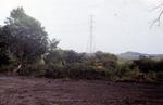 Record of damage to trees covered by Tree Preservation Order