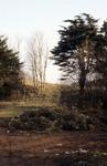 Callendar Wood Wall