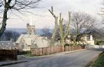 Tree Preservation Order, Grange Terrace, Bo'ness